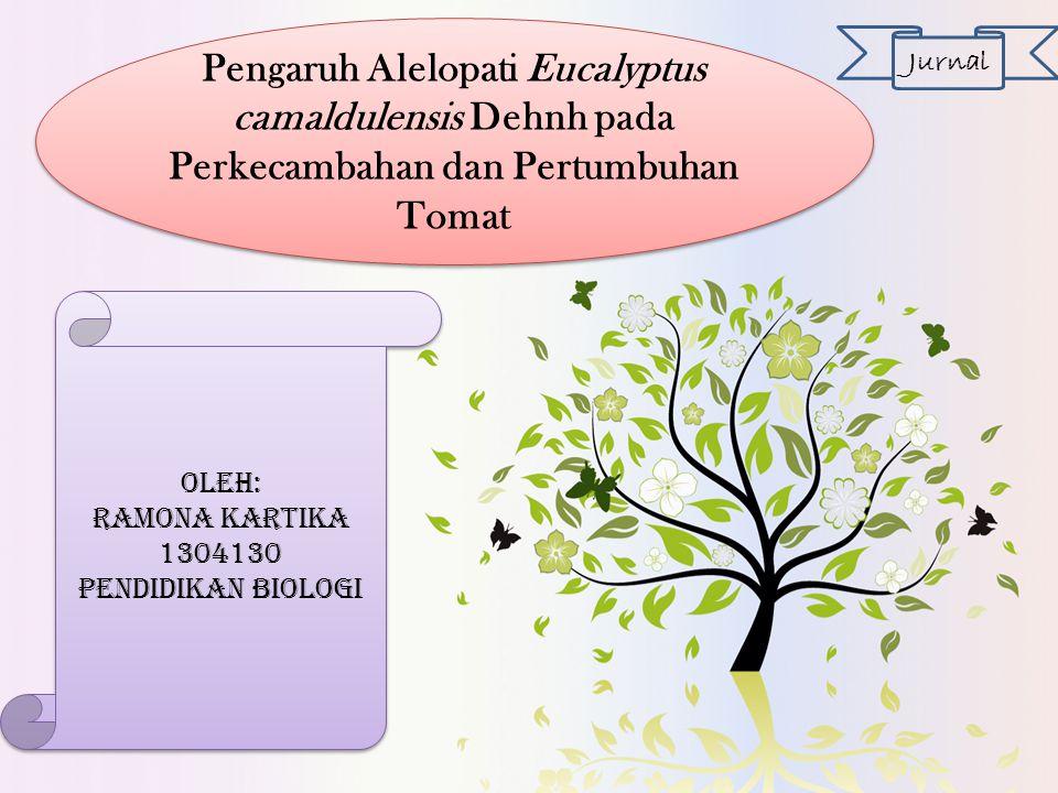 Pengaruh Alelopati Eucalyptus camaldulensis Dehnh pada Perkecambahan dan Pertumbuhan Tomat Jurnal Oleh: Ramona Kartika 1304130 Pendidikan biologi Oleh