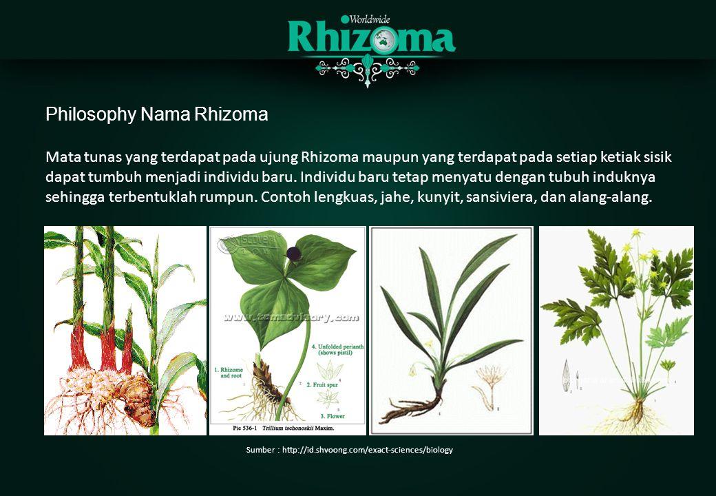 Philosophy Nama Rhizoma Mata tunas yang terdapat pada ujung Rhizoma maupun yang terdapat pada setiap ketiak sisik dapat tumbuh menjadi individu baru.