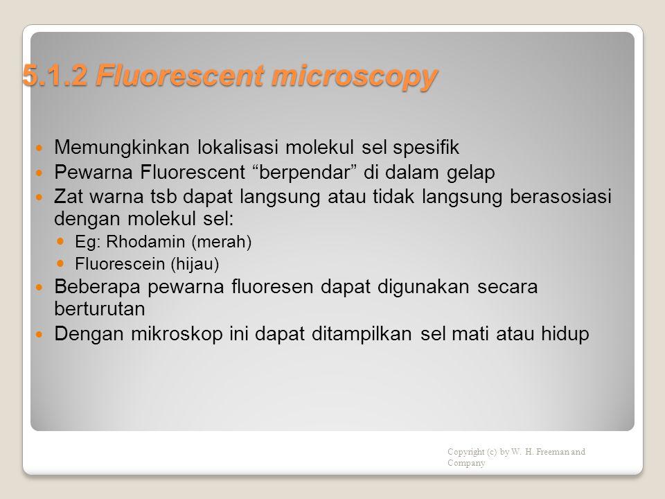 Bagan alat Mikroskop fluoresen Figure 5-5 Figure 5-6 Aktin dari kultur sel fibroblast