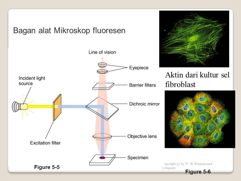 Mikroskopi cahaya untuk objek 3-D Mikroskopi cahaya untuk objek 3-D Copyright (c) by W.