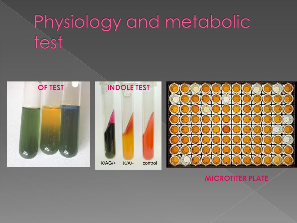 OF TEST MICROTITER PLATE INDOLE TEST