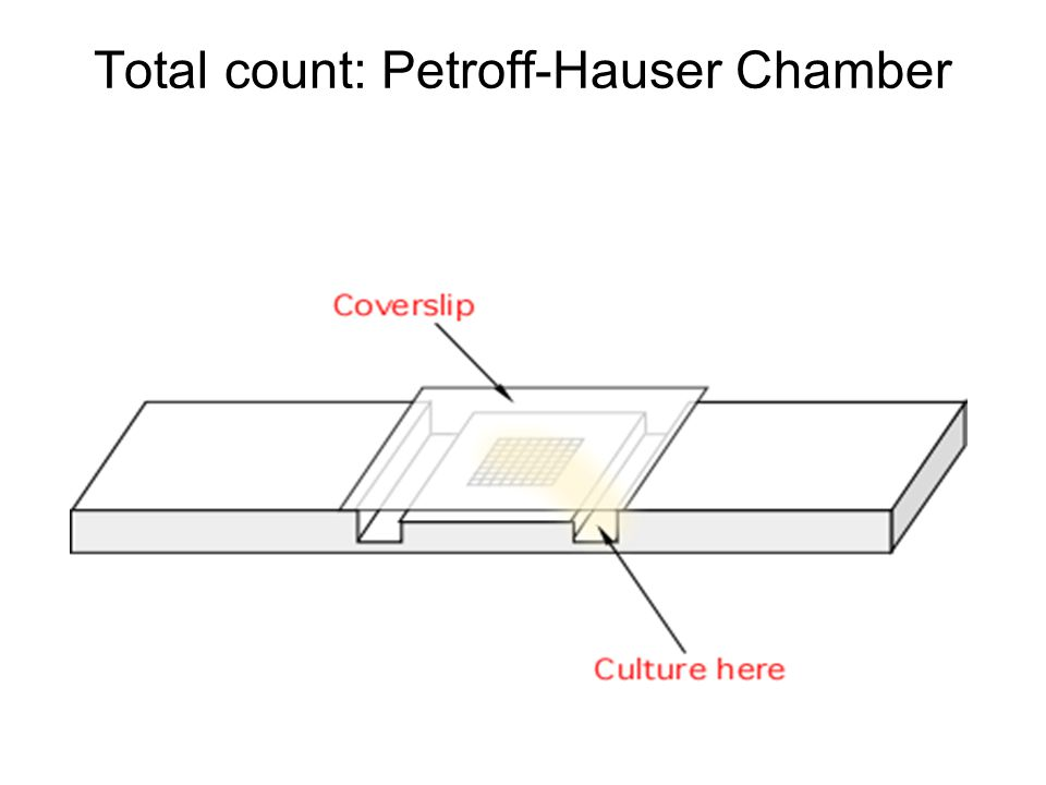Total count: Petroff-Hauser Chamber