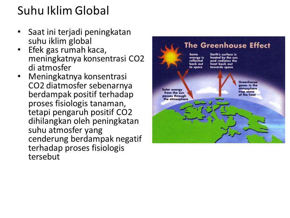 Suhu Iklim Global • Saat ini terjadi peningkatan suhu iklim global • Efek gas rumah kaca, meningkatnya konsentrasi CO2 di atmosfer • Meningkatnya konsentrasi CO2 diatmosfer sebenarnya berdampak positif terhadap proses fisiologis tanaman, tetapi pengaruh positif CO2 dihilangkan oleh peningkatan suhu atmosfer yang cenderung berdampak negatif terhadap proses fisiologis tersebut