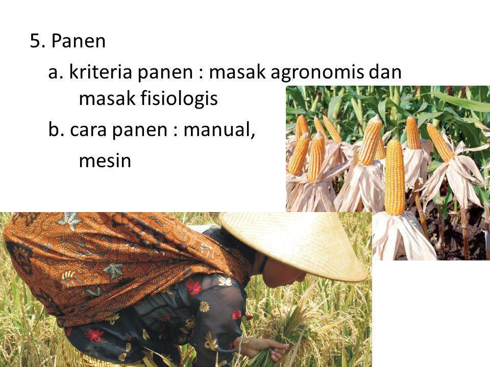 5. Panen a. kriteria panen : masak agronomis dan masak fisiologis b. cara panen : manual, mesin