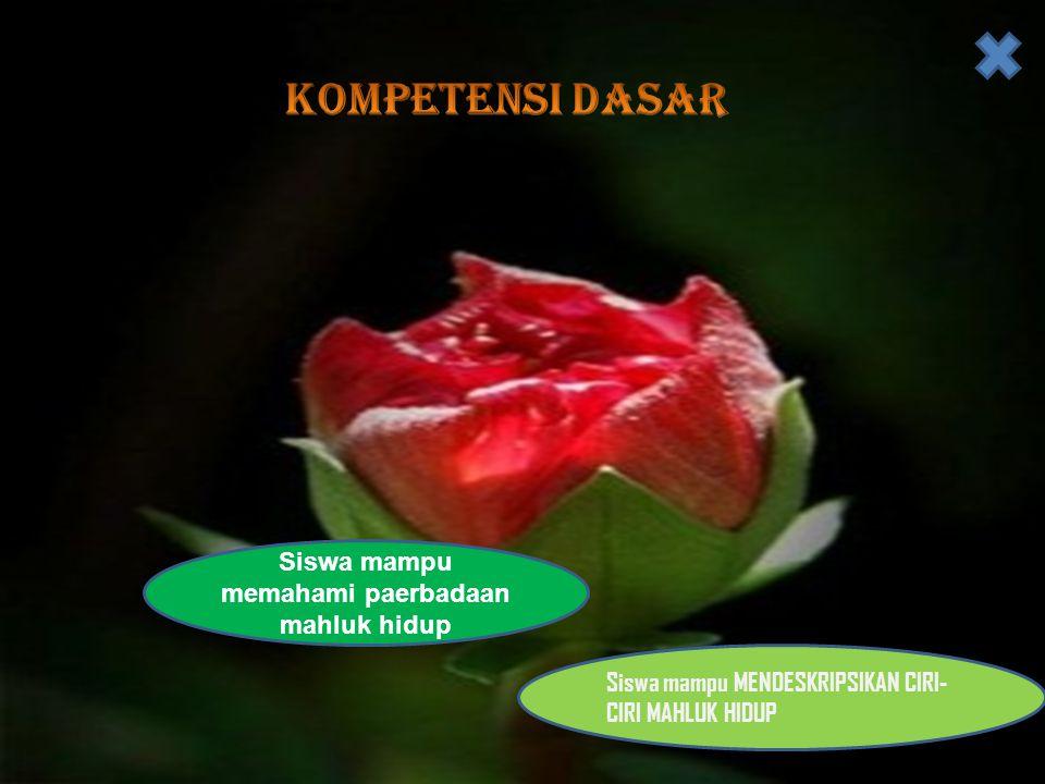 • 7 ).Kelompok tumbuhan berbiji terbuka antara lain… a.