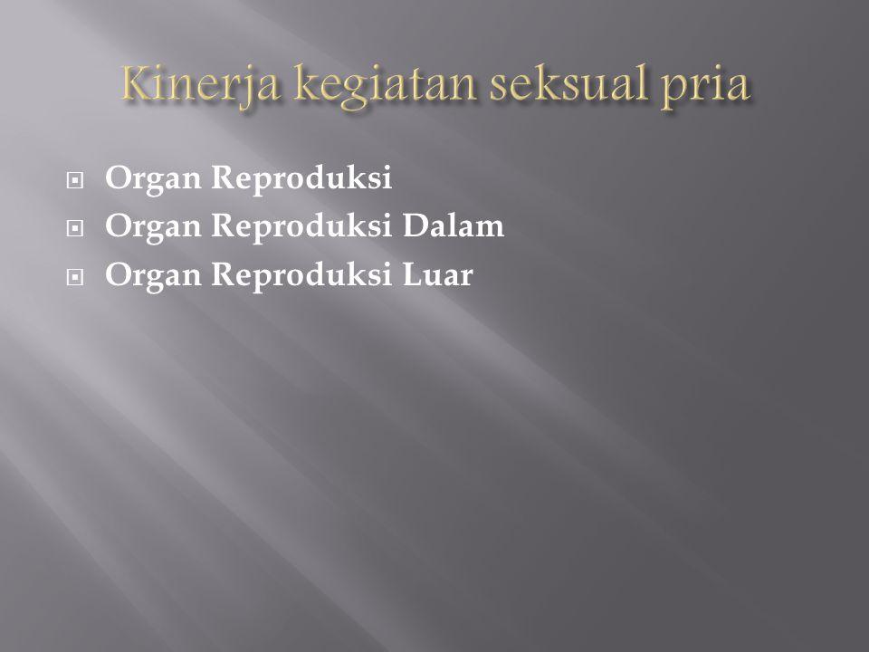  Organ Reproduksi  Organ Reproduksi Dalam  Organ Reproduksi Luar