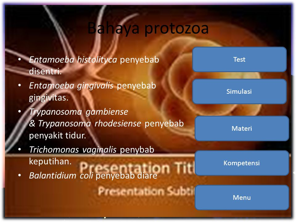 Bahaya protozoa • Entamoeba histolityca penyebab disentri. • Entamoeba gingivalis penyebab gingivitas. • Trypanosoma gambiense & Trypanosoma rhodesien