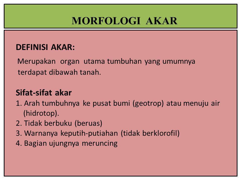 DEFINISI AKAR: Merupakan organ utama tumbuhan yang umumnya terdapat dibawah tanah. Sifat-sifat akar 1. Arah tumbuhnya ke pusat bumi (geotrop) atau men