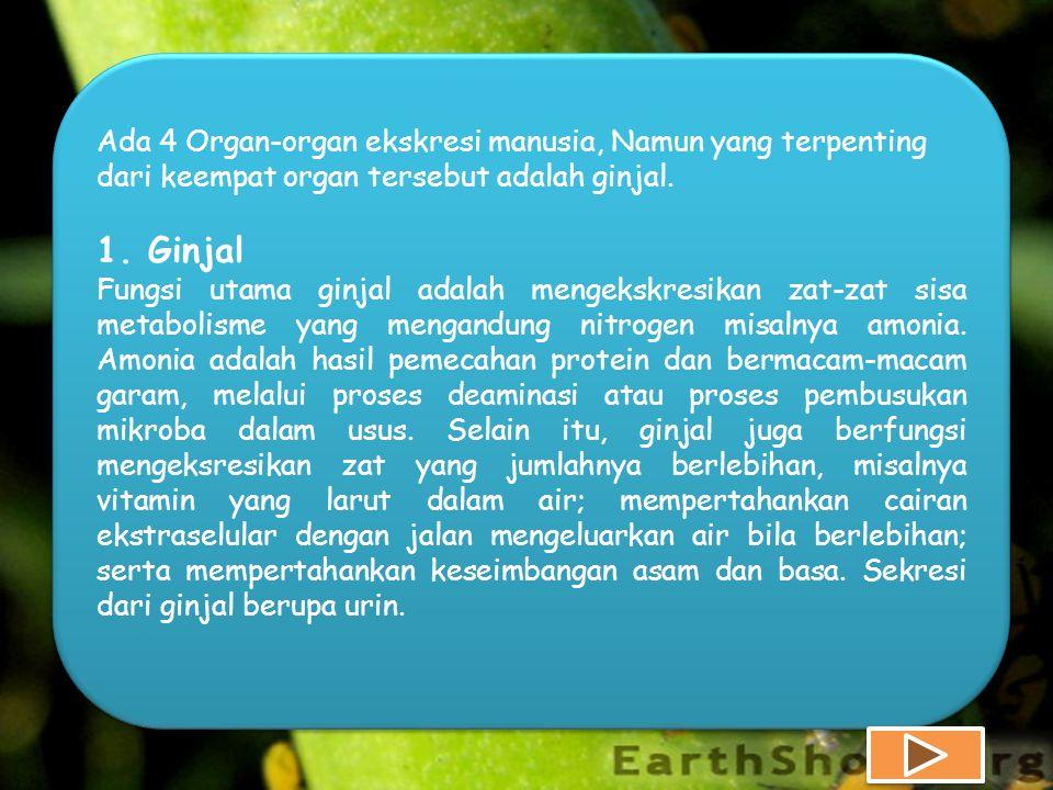 Ada 4 Organ-organ ekskresi manusia, Namun yang terpenting dari keempat organ tersebut adalah ginjal.