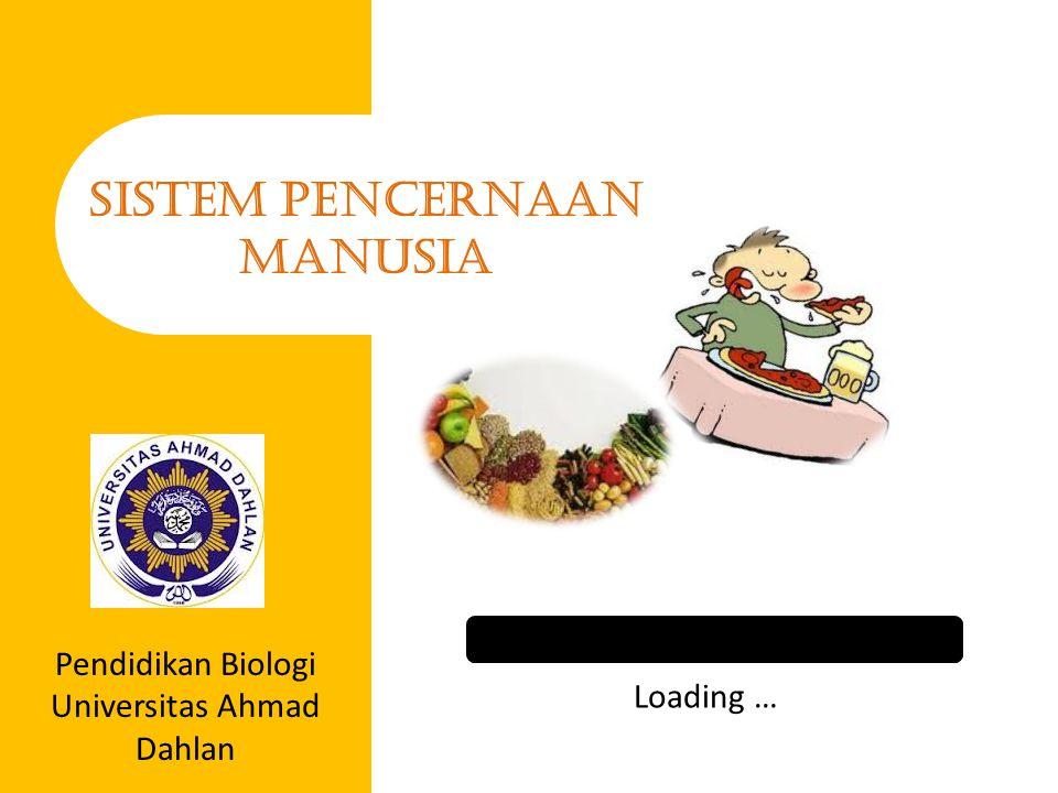 Loading … SISTEM PENCERNAAN MANUSIA Pendidikan Biologi Universitas Ahmad Dahlan