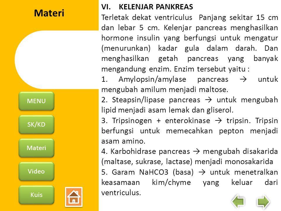 SK/KD Materi Video Kuis MENU VI. KELENJAR PANKREAS Terletak dekat ventriculus Panjang sekitar 15 cm dan lebar 5 cm. Kelenjar pancreas menghasilkan hor