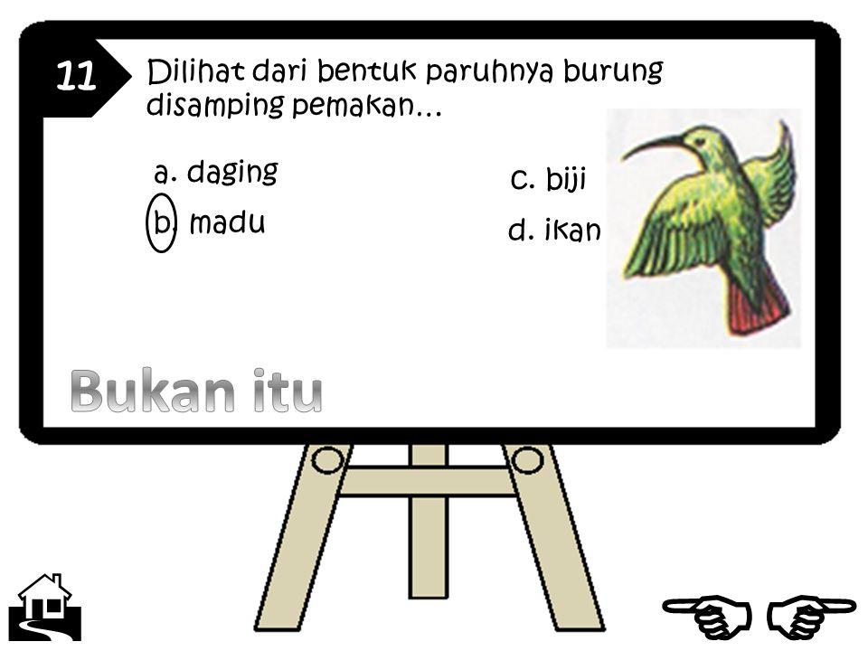 11 Dilihat dari bentuk paruhnya burung disamping pemakan… a. daging b. madu c. biji d. ikan  