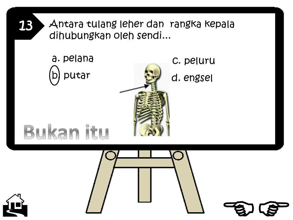 13 Antara tulang leher dan rangka kepala dihubungkan oleh sendi...