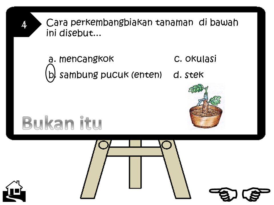 4 Cara perkembangbiakan tanaman di bawah ini disebut...