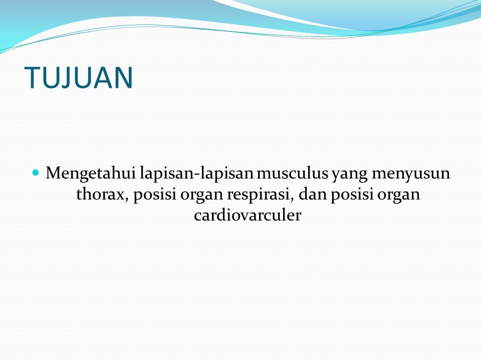 TUJUAN  Mengetahui lapisan-lapisan musculus yang menyusun thorax, posisi organ respirasi, dan posisi organ cardiovarculer