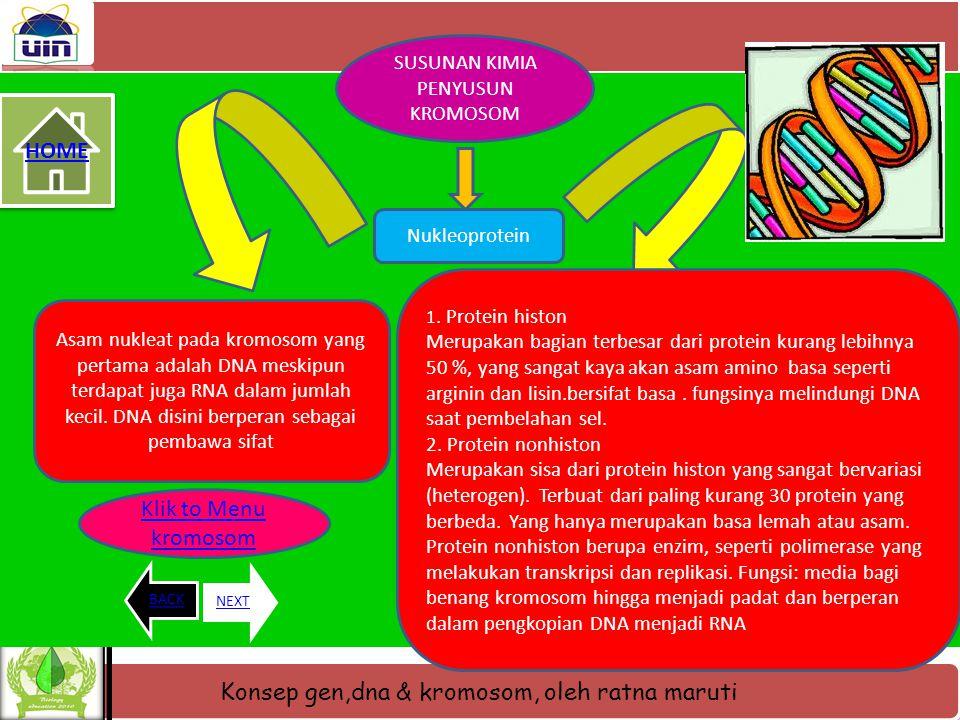 Konsep gen,dna & kromosom, oleh ratna maruti HOME BACKNEXT Gambar kromosom dan bagian- bagiannya Klik to Menu kromosom