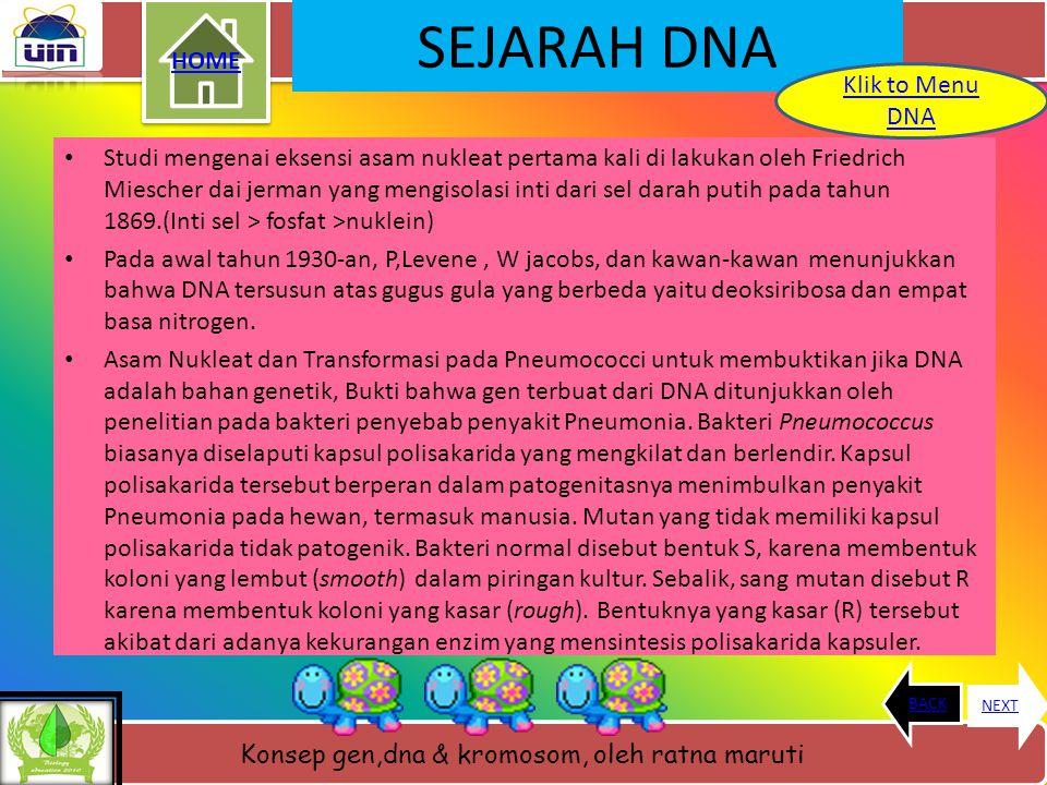 Konsep gen,dna & kromosom, oleh ratna maruti WHAT IS DNA ???? Fungsi DNA DNA HOME BACKNEXT Menu DNA