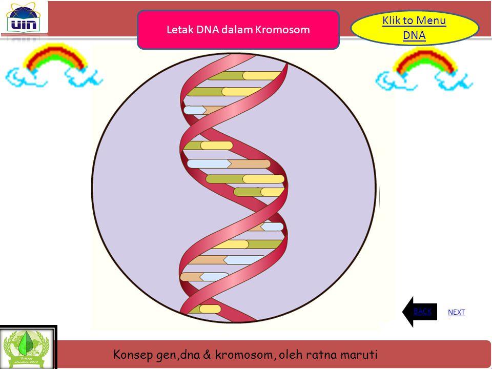 Konsep gen,dna & kromosom, oleh ratna maruti Letak DNA semua mahluk hidup kecuali beberap virus memiliki DNA. Di dalam sel, bagian terbesar DNA terseb