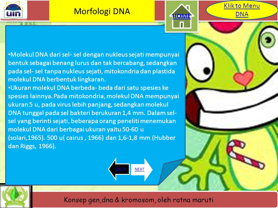 Konsep gen,dna & kromosom, oleh ratna maruti Letak DNA dalam Kromosom BACKNEXT Klik to Menu DNA