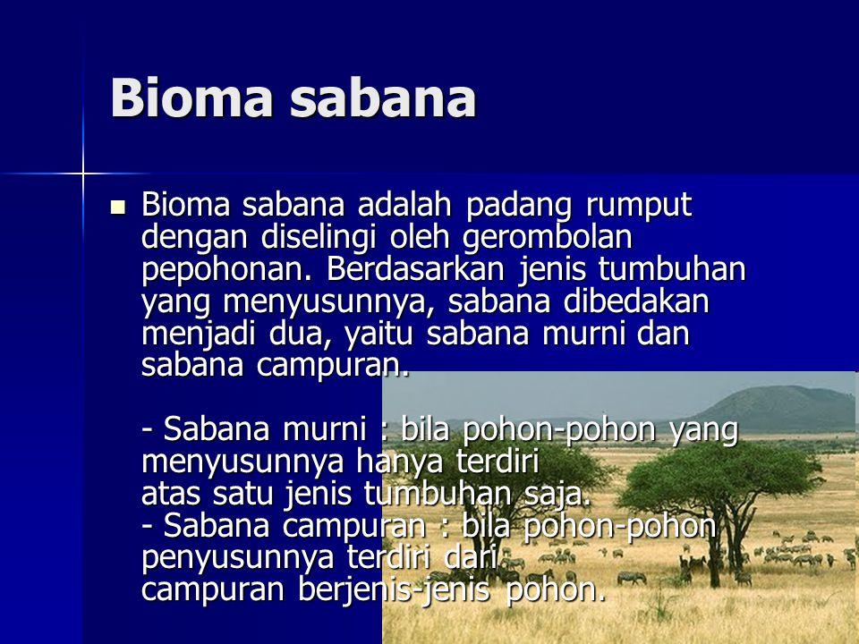 Bioma sabana  Bioma sabana adalah padang rumput dengan diselingi oleh gerombolan pepohonan.