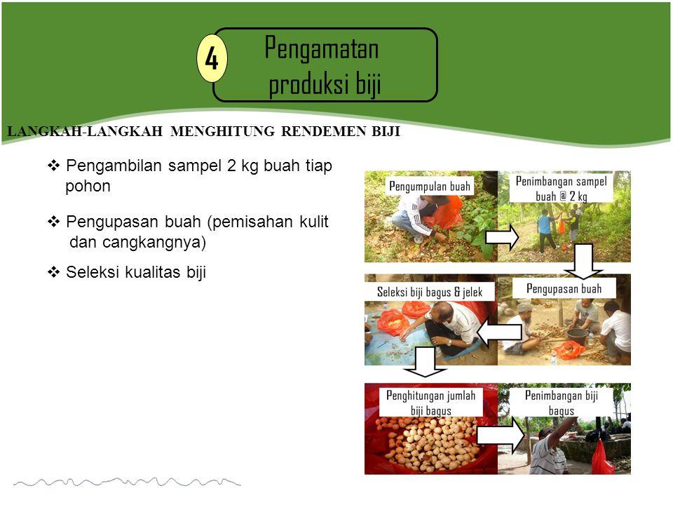 Pengamatan produksi biji 4 LANGKAH-LANGKAH MENGHITUNG RENDEMEN BIJI  Pengambilan sampel 2 kg buah tiap pohon  Pengupasan buah (pemisahan kulit dan c