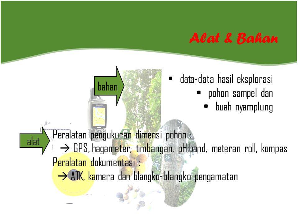 bahan Alat & Bahan alat • data-data hasil eksplorasi • pohon sampel dan • buah nyamplung Peralatan pengukuran dimensi pohon :  GPS, hagameter, timban