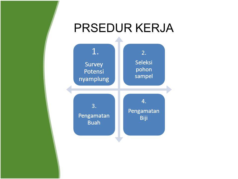 1. Survey Potensi nyamplung 2. Seleksi pohon sampel 3. Pengamatan Buah 4. Pengamatan Biji PRSEDUR KERJA