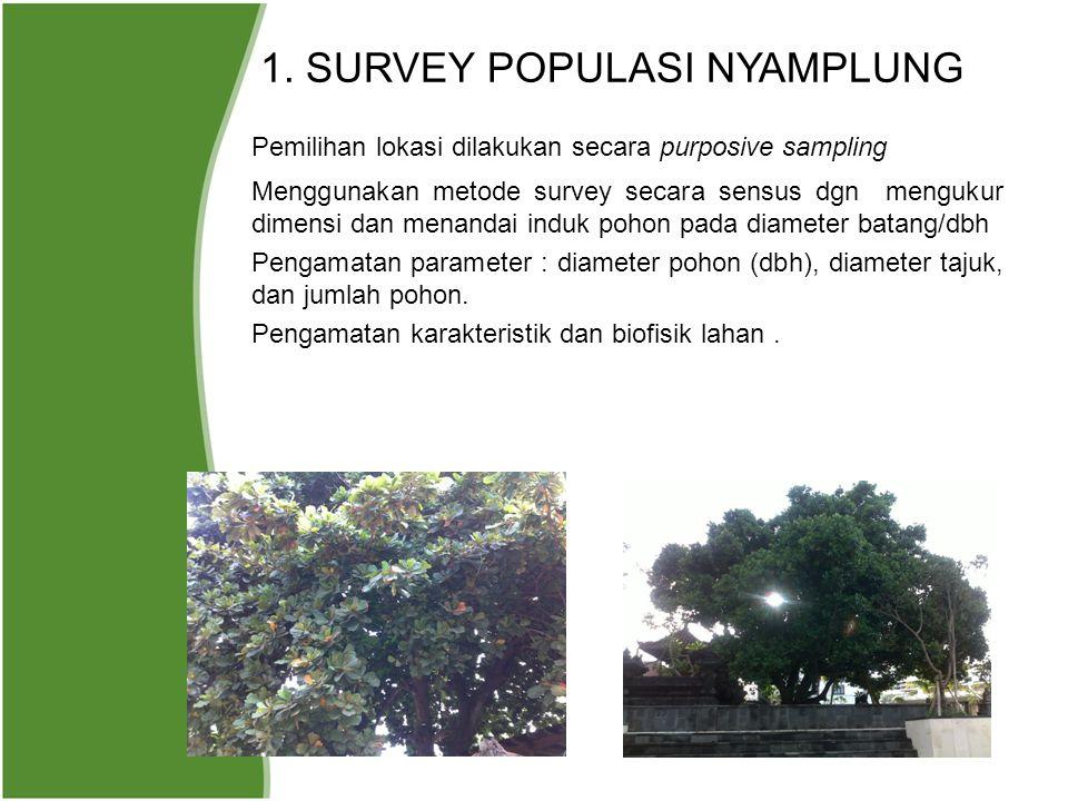 1. SURVEY POPULASI NYAMPLUNG Pemilihan lokasi dilakukan secara purposive sampling Menggunakan metode survey secara sensus dgn mengukur dimensi dan men