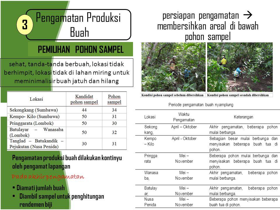 Pengamatan produksi biji 4 LANGKAH-LANGKAH MENGHITUNG RENDEMEN BIJI  Pengambilan sampel 2 kg buah tiap pohon  Pengupasan buah (pemisahan kulit dan cangkangnya)  Seleksi kualitas biji