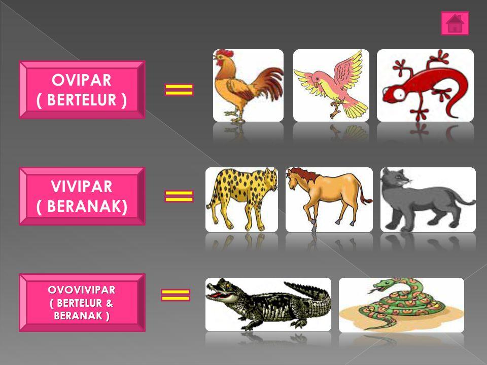 OVIPAR ( BERTELUR ) OVOVIVIPAR ( BERTELUR DAN MELAHIRKAN) VIVIPAR ( BERANAK / MELAHIRKAN )