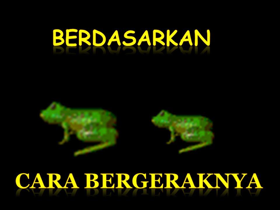 OVIPAR ( BERTELUR ) VIVIPAR ( BERANAK) OVOVIVIPAR ( BERTELUR & BERANAK )