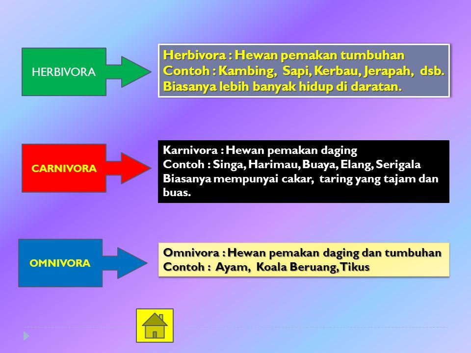 HERBIVORA Herbivora : Hewan pemakan tumbuhan Contoh : Kambing, Sapi, Kerbau, Jerapah, dsb.