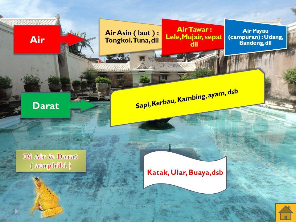 Air Tawar : Lele,Mujair, sepat dll Air Payau (campuran) : Udang, Bandeng, dll Air Darat Katak, Ular, Buaya,dsb