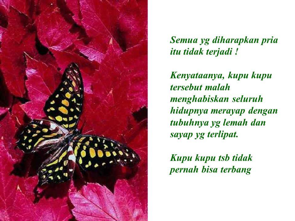 Semua yg diharapkan pria itu tidak terjadi ! Kenyataanya, kupu kupu tersebut malah menghabiskan seluruh hidupnya merayap dengan tubuhnya yg lemah dan