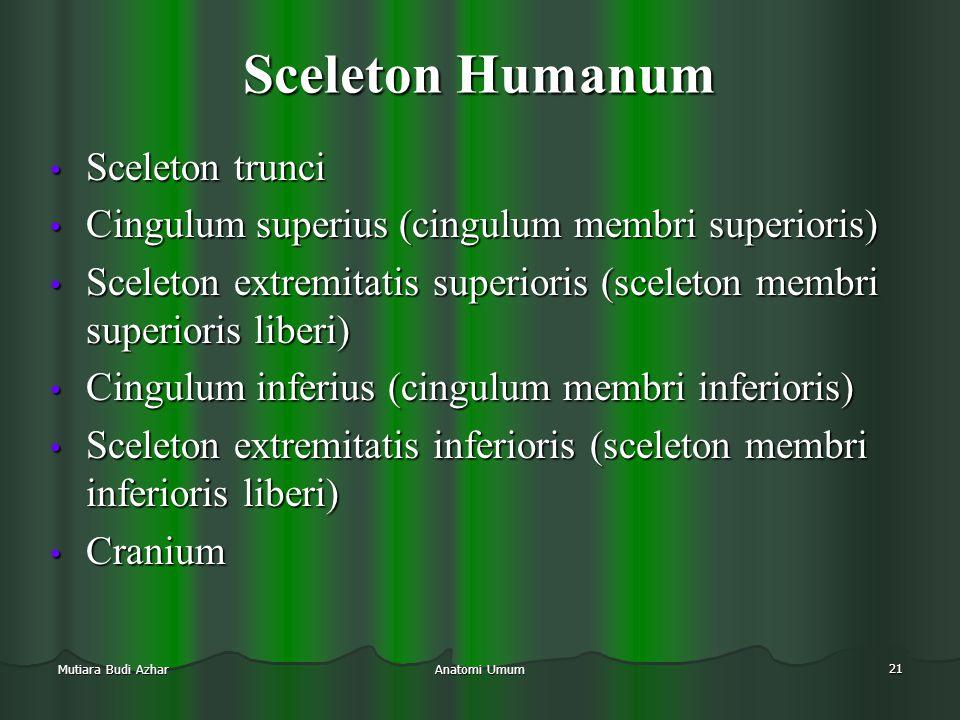 Anatomi Umum 21 Mutiara Budi Azhar Sceleton Humanum • Sceleton trunci • Cingulum superius (cingulum membri superioris) • Sceleton extremitatis superio