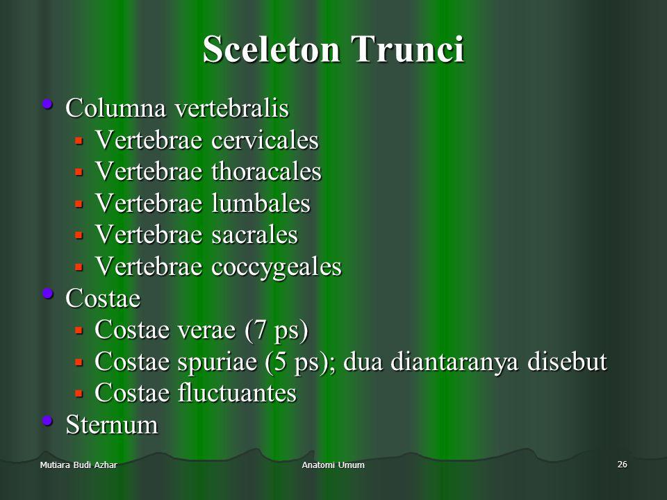 Anatomi Umum 26 Mutiara Budi Azhar Sceleton Trunci • Columna vertebralis  Vertebrae cervicales  Vertebrae thoracales  Vertebrae lumbales  Vertebra
