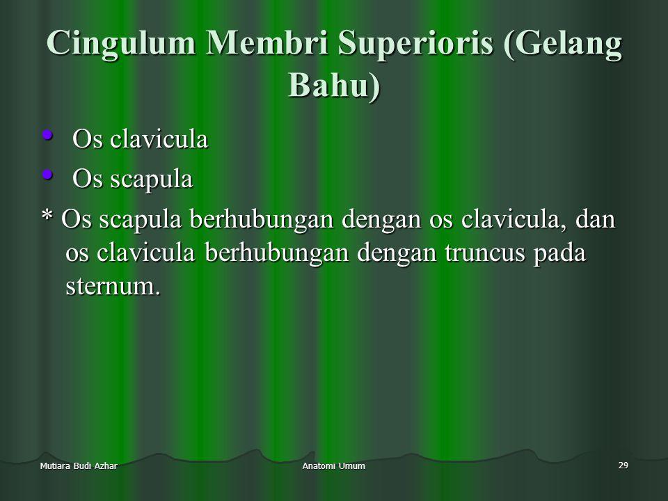Anatomi Umum 29 Mutiara Budi Azhar Cingulum Membri Superioris (Gelang Bahu) • Os clavicula • Os scapula * Os scapula berhubungan dengan os clavicula,