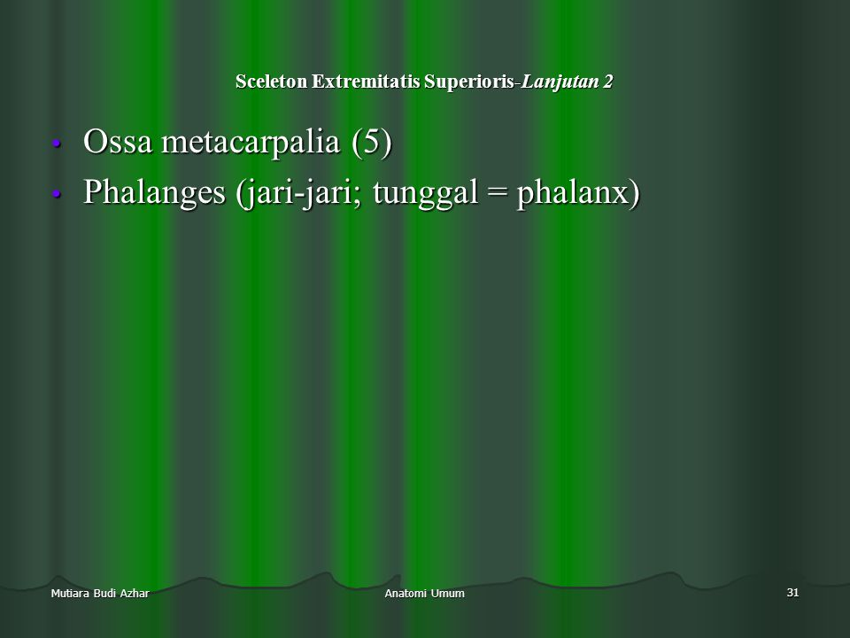 Anatomi Umum 31 Mutiara Budi Azhar Sceleton Extremitatis Superioris-Lanjutan 2 • Ossa metacarpalia (5) • Phalanges (jari-jari; tunggal = phalanx) • Ph