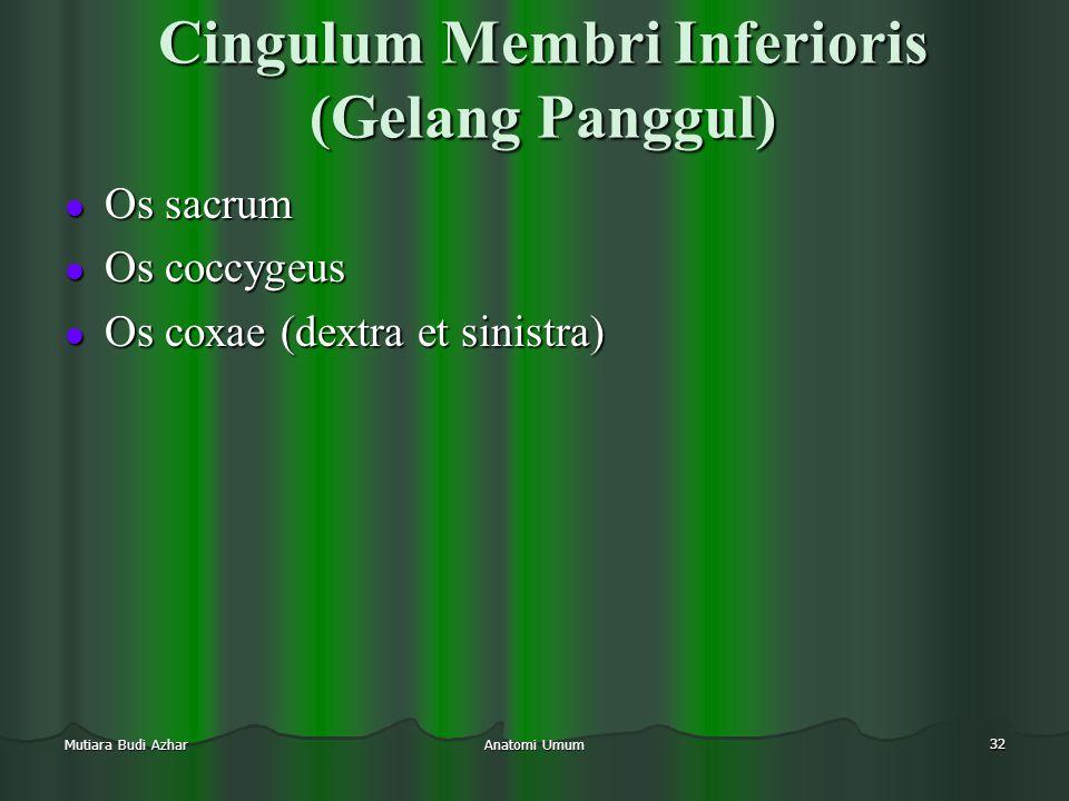 Anatomi Umum 32 Mutiara Budi Azhar Cingulum Membri Inferioris (Gelang Panggul)  Os sacrum  Os coccygeus  Os coxae (dextra et sinistra)