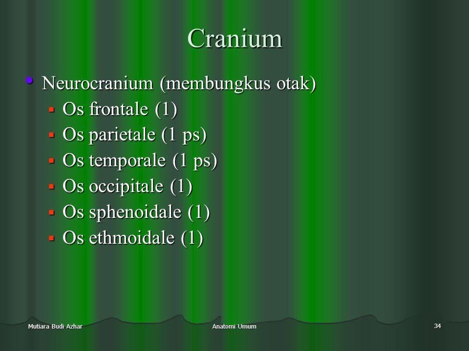 Anatomi Umum 34 Mutiara Budi Azhar Cranium • Neurocranium (membungkus otak)  Os frontale (1)  Os parietale (1 ps)  Os temporale (1 ps)  Os occipit
