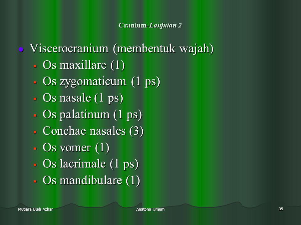 Anatomi Umum 35 Mutiara Budi Azhar Cranium-Lanjutan 2  Viscerocranium (membentuk wajah)  Os maxillare (1)  Os zygomaticum (1 ps)  Os nasale (1 ps)