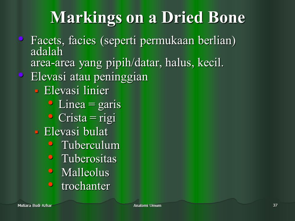 Anatomi Umum 37 Mutiara Budi Azhar Markings on a Dried Bone • Facets, facies (seperti permukaan berlian) adalah area-area yang pipih/datar, halus, kec