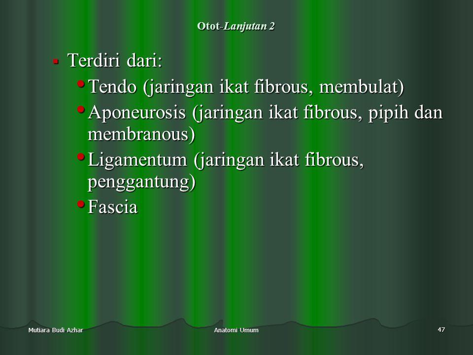 Anatomi Umum 47 Mutiara Budi Azhar Otot-Lanjutan 2  Terdiri dari: • Tendo (jaringan ikat fibrous, membulat) • Aponeurosis (jaringan ikat fibrous, pip