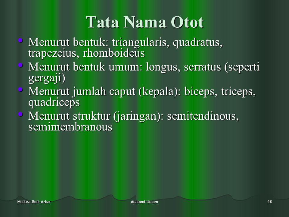 Anatomi Umum 48 Mutiara Budi Azhar Tata Nama Otot • Menurut bentuk: triangularis, quadratus, trapezeius, rhomboideus • Menurut bentuk umum: longus, se