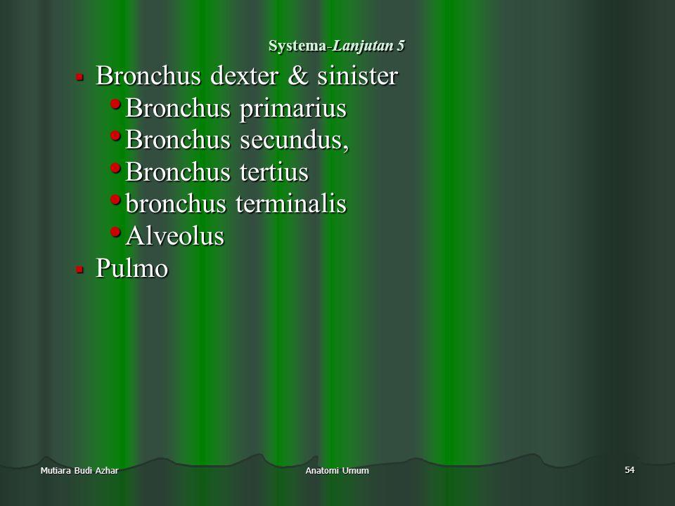 Anatomi Umum 54 Mutiara Budi Azhar Systema-Lanjutan 5  Bronchus dexter & sinister • Bronchus primarius • Bronchus secundus, • Bronchus tertius • bron