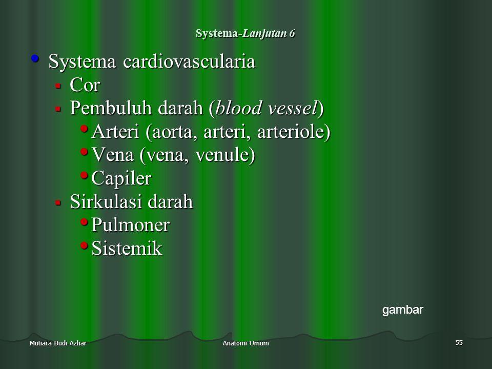 Anatomi Umum 55 Mutiara Budi Azhar Systema-Lanjutan 6 • Systema cardiovascularia  Cor  Pembuluh darah (blood vessel) • Arteri (aorta, arteri, arteri