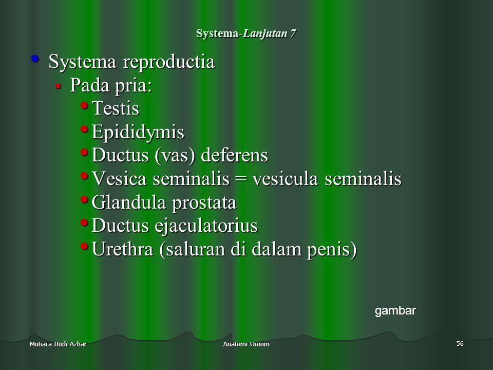 Anatomi Umum 56 Mutiara Budi Azhar Systema-Lanjutan 7 • Systema reproductia  Pada pria: • Testis • Epididymis • Ductus (vas) deferens • Vesica semina