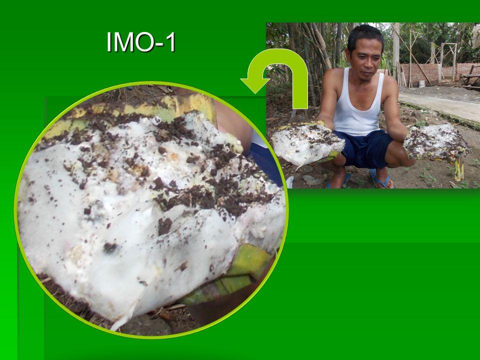 IMO-1 IMO-1