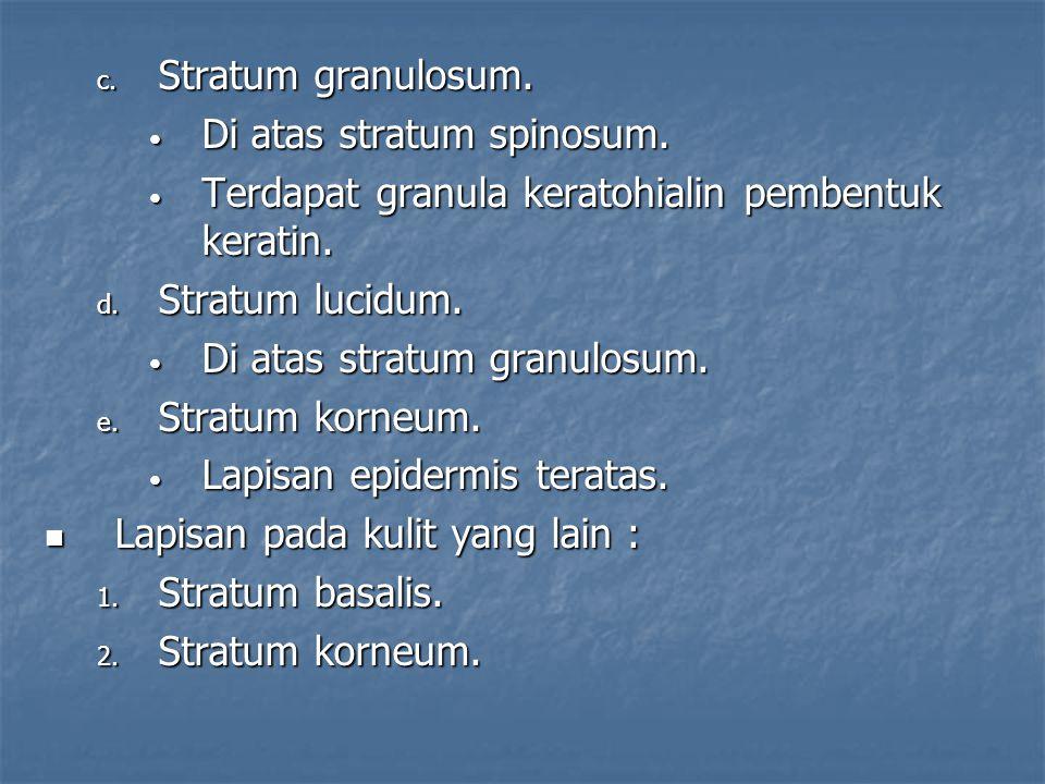 c.Stratum granulosum. • Di atas stratum spinosum.