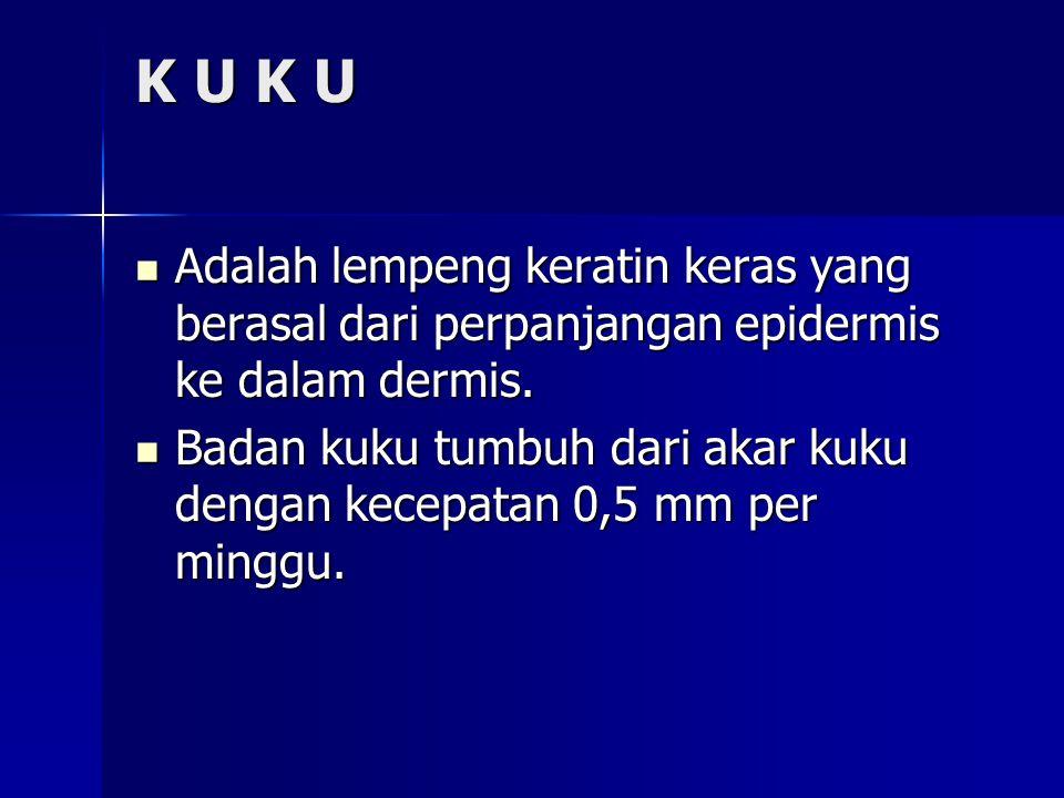 K U K U  Adalah lempeng keratin keras yang berasal dari perpanjangan epidermis ke dalam dermis.